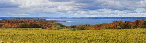 grandtraversebay lakemichigan mi michigan october oldmissionpeninsula traversecity autumn fall fallcolors landscape leafpeeping panorama travel vineyard unitedstates us