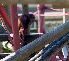 Orangutan Nursery April 2017