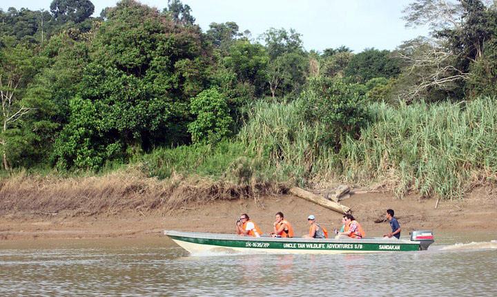 safari i Borneos regnskov