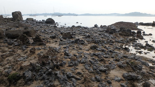 Living rocky shores of Changi Creek