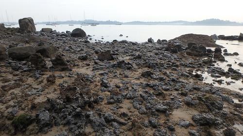 Living rocky shores of Changi Creek