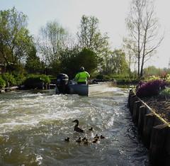 Amiens canotage dans les hortillonnages (30)