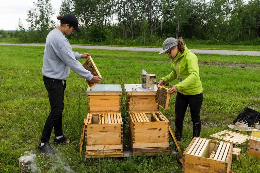 Petite visite de nos ruches 35847004326_bedc4e918e_b