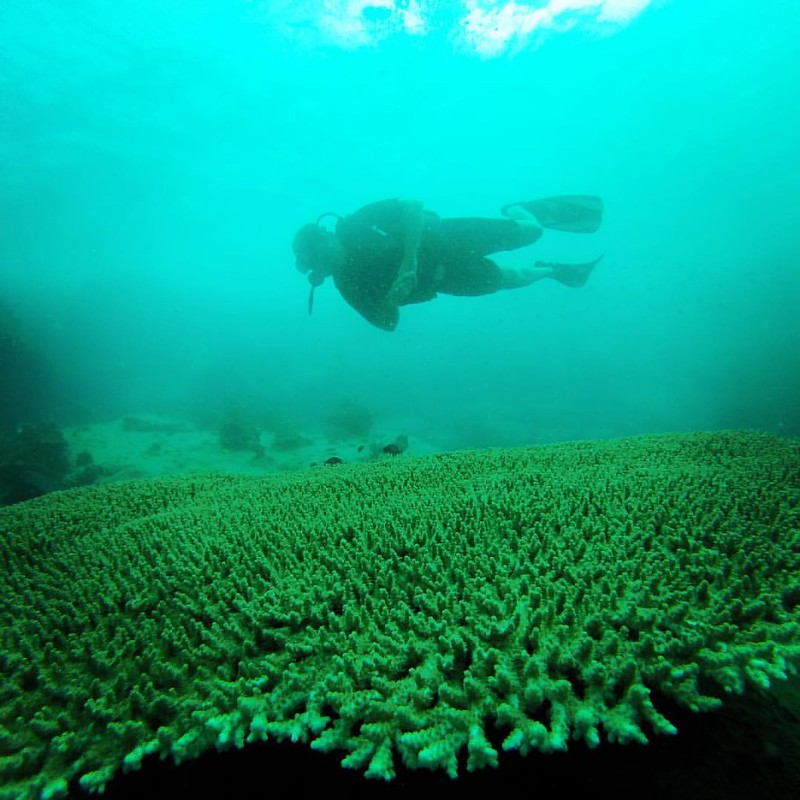 Descubriendo el mundo submarino! ??? #submarinismo #kohtao #ocean #newhobby