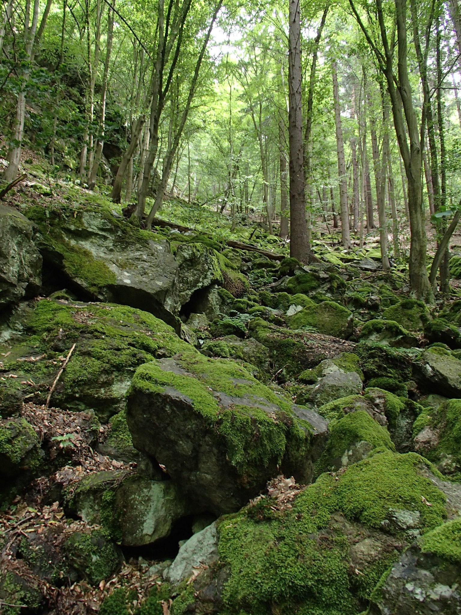 Grönt stenvattenfall