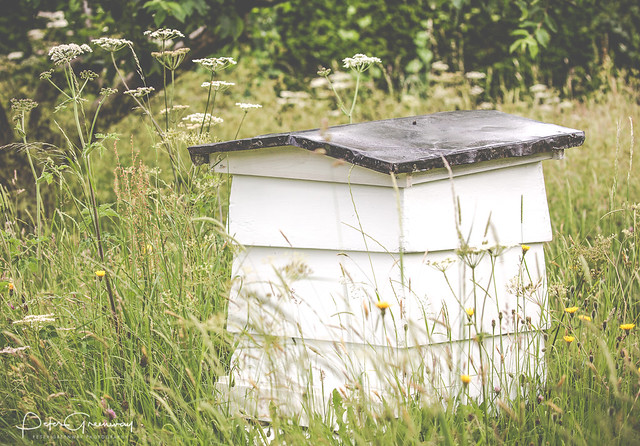 Beehive In An English Meadow At Sulgrave Manor