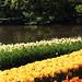 Make some Bloom for the Netherlands - vol.3