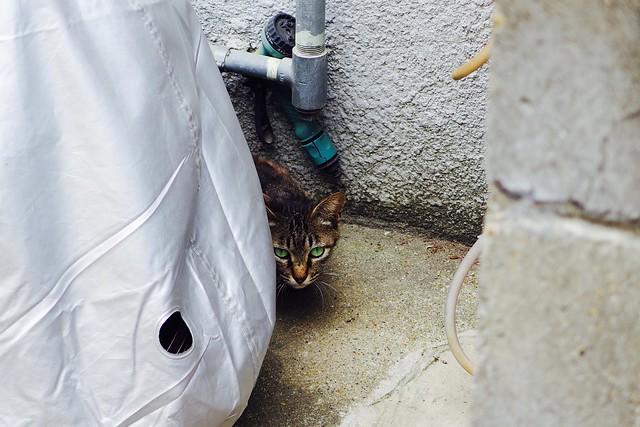 Today's Cat@2017-06-23