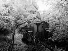 Scottish jungle (M2227219 M2227220 E-M1ii 9mm iso200 f8 1_15s)