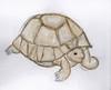 tortoise ec
