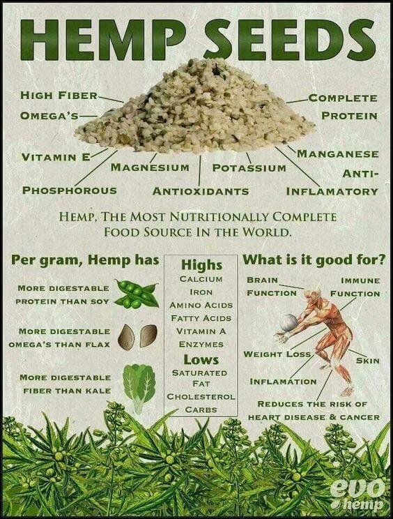 Valor nutricional de las semillas de cáñamo #infografía