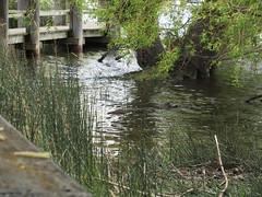 Lake encroaching on wetland