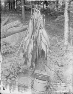 Salmon trout caught at Monteith House, Rosseau, Muskoka Lakes, Ontario / Truites saumonées prises à Monteith House, Rosseau, lac Rosseau, lacs Muskoka (Ontario)