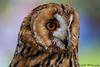 Owl Owl !! by Sreejith S.