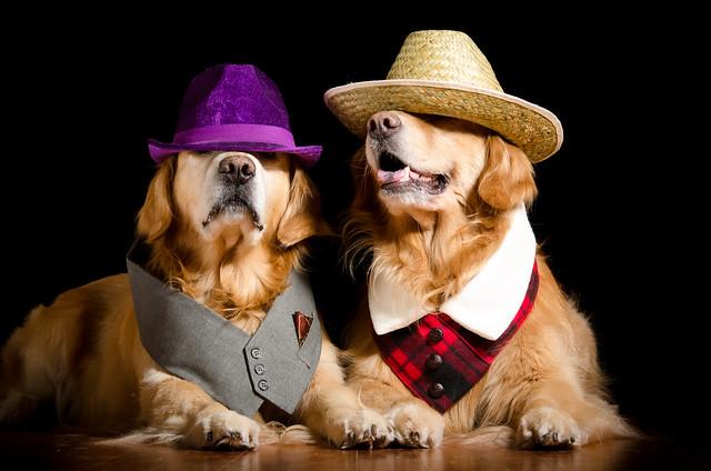 City Dog Country Dog