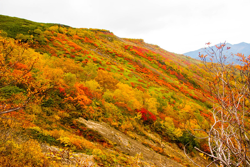 20150918-大雪山黒岳-0809.jpg
