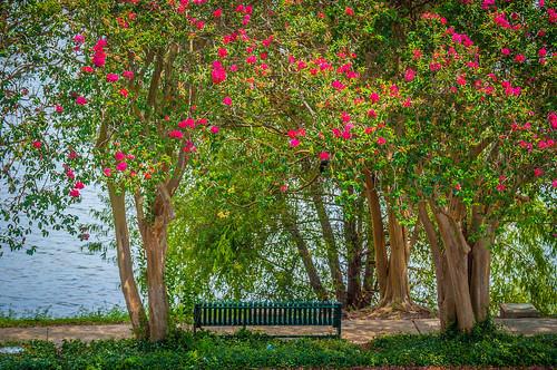 Lovely Lakeside Seat