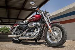 Harley-Davidson XL SPORTSTER 1200 CUSTOM 2017 - 1