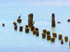 Cormorant's Look-out