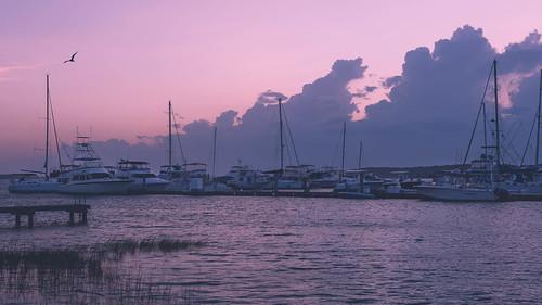 bird nikon7200 boats marina nikon sunset nikon1755mm follybeach