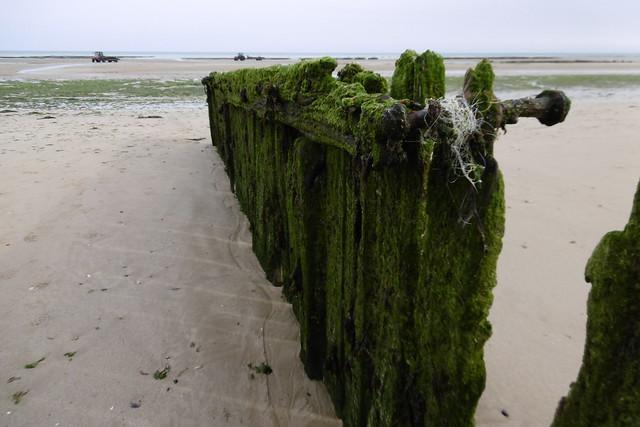 Sur la plage, Panasonic DMC-SZ10