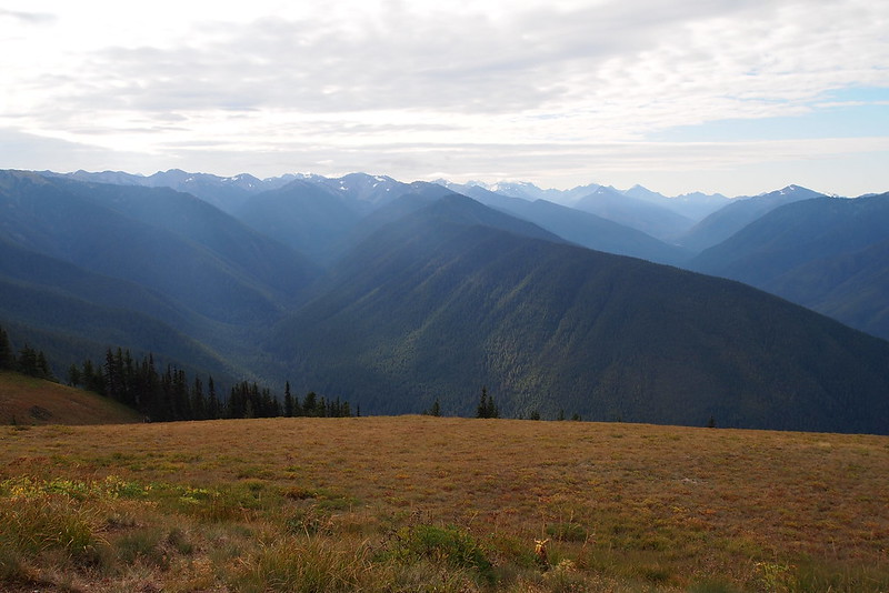 Hurricane Ridge 2013