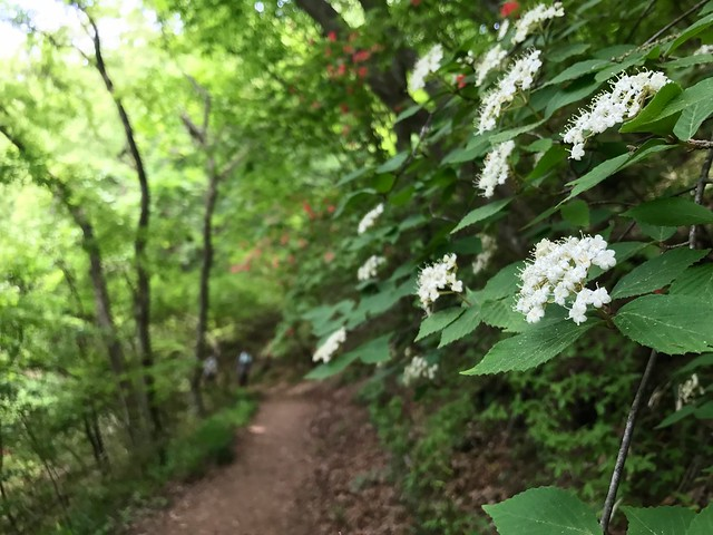 大和葛城山 自然研究路 登山道