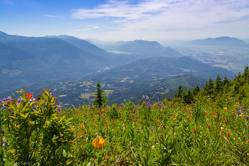 2017 britishcolumbia canada chilliwack elkmountain hiking summer flowers wildflowers tigerlily liliumcolumbianum columbialily oregonlily view mountains bordermountains