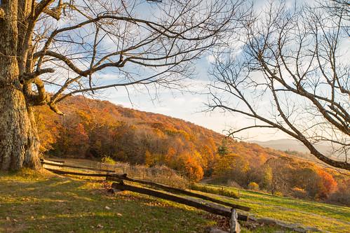 photosbymch landscape fallcolors autumn leaves trees splitrailfence mosesconemanor blueridgeparkway appalachianmountains northcarolina usa canon 5dmkiii 2016 outdoors