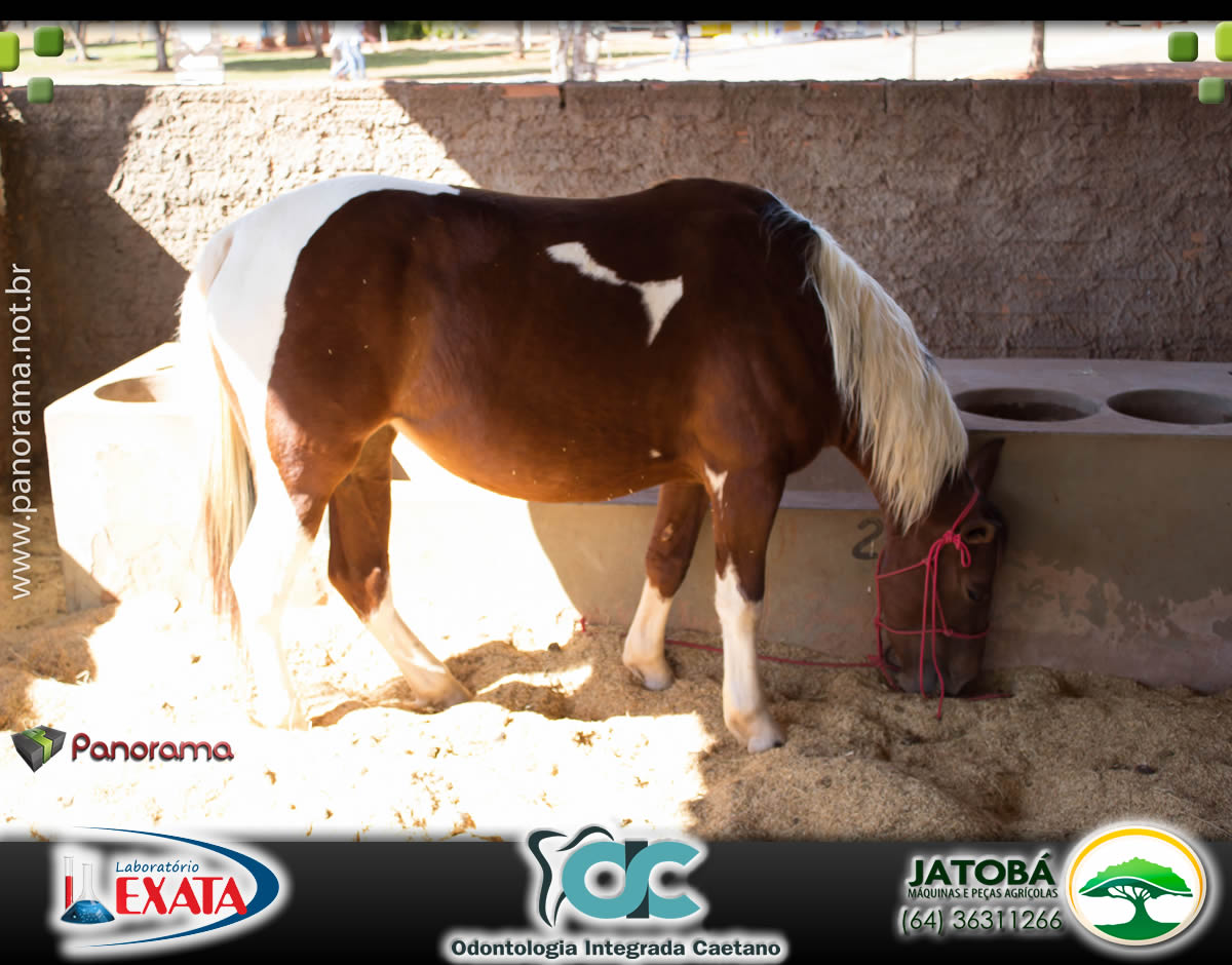 PaNoRaMa COD (134)
