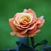 flores pastel 2