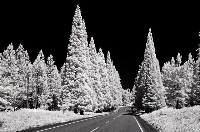 preposterous trees