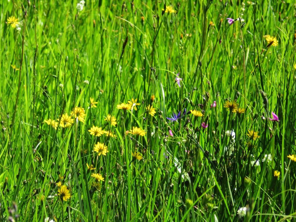 Wildflowers along the Rho Ridge Trail