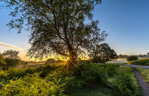 tree flare bracken sun sunrise rockfordcommon newforest landscape mist