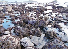 Pebble Beach tidepools 0220