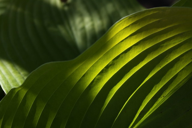 In a garden leafy, Canon EOS 50D, Canon EF 17-40mm f/4L