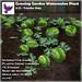 [ free bird ] Growing Garden- Watermelon Plant