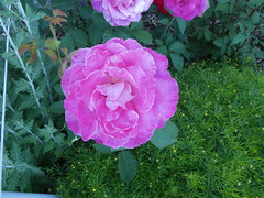 Flowers Missoula Montana RV Park (3)