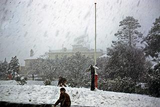 Snowy Carrington