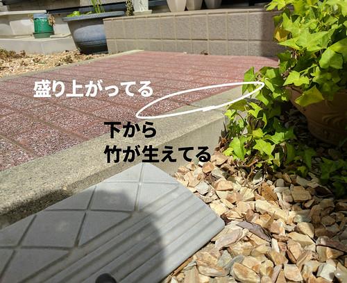 竹害で押し上げられたアプローチの石