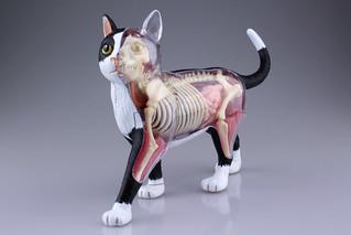 鏟屎官們必備款~(淚目) 4D VISION ANIMAL 動物解剖模型No.29 貓(黑/白) 猫 解剖モデル 黒/白