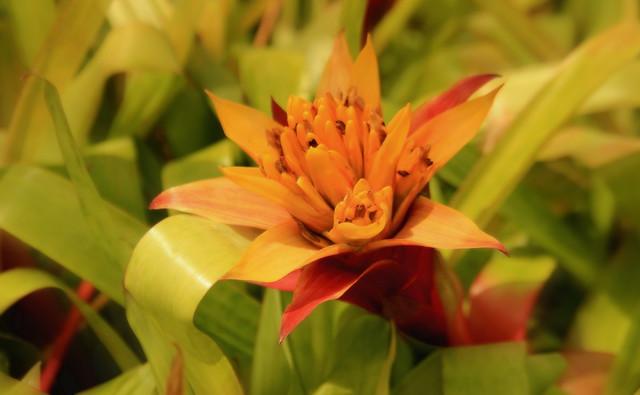 Botanical garden, V cr, Canon EOS 600D, Canon EF-S 18-135mm f/3.5-5.6 IS