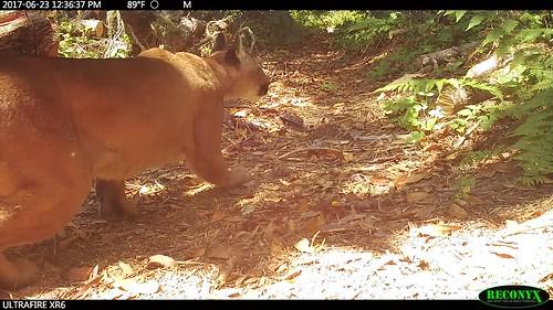 Trailcam captures