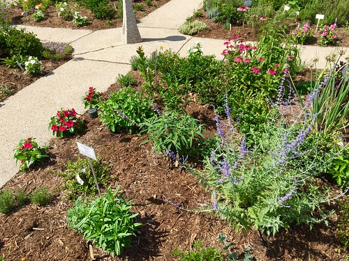 NLM Herb Garden: Open House 6/19/2017