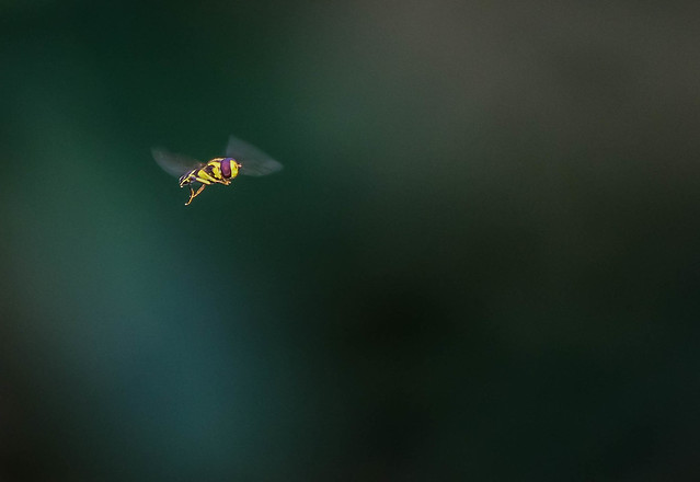 an insect in fly