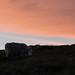 sunset lamb