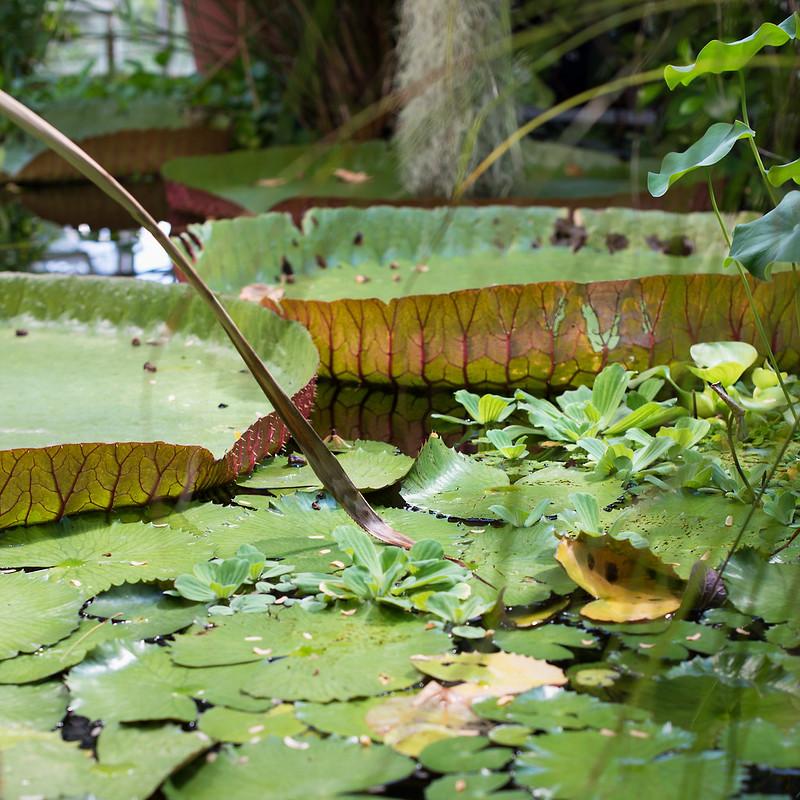 botanisk hage 07
