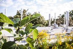 062617_GEOL rooftop garden_01