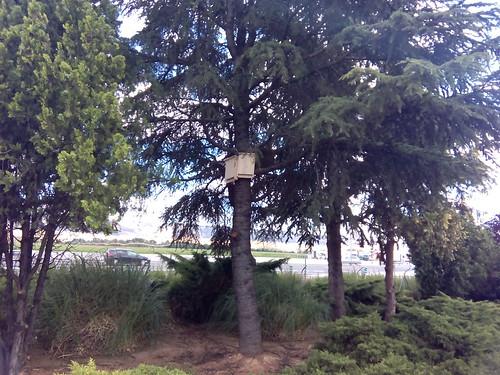 Refugios en árboles