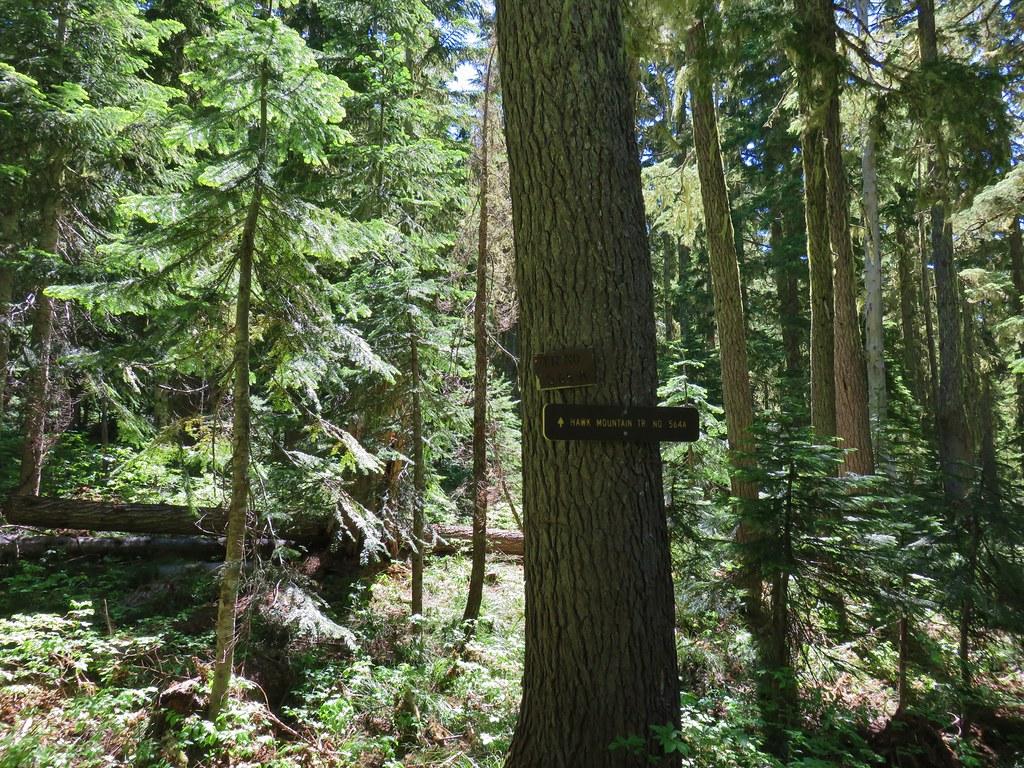 Rho Ridge Trail jct with the Hawk Mountain Trail